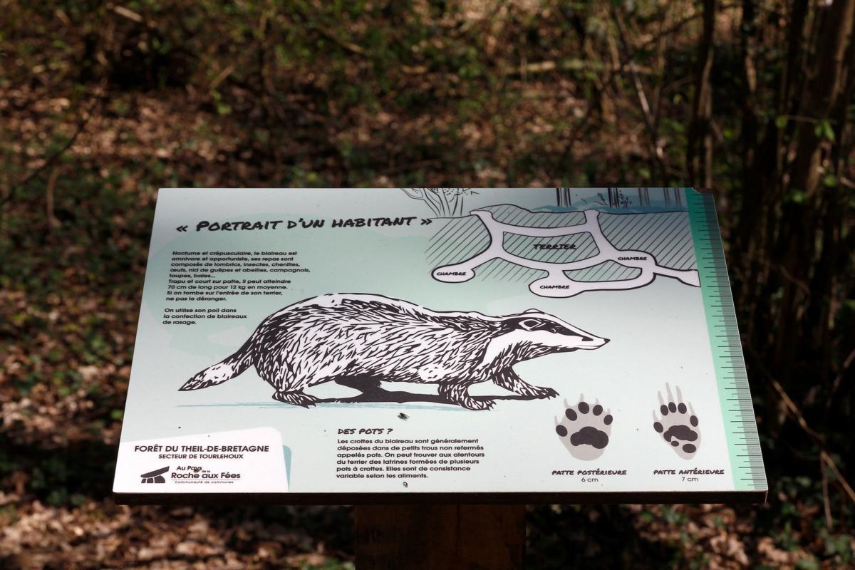 planche pédagogique éco-système-06-forêt theil de bretagne