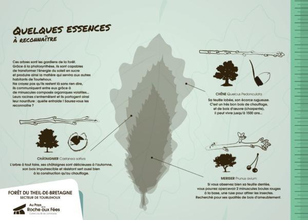planche pédagogique éco-système-02-forêt theil de bretagne