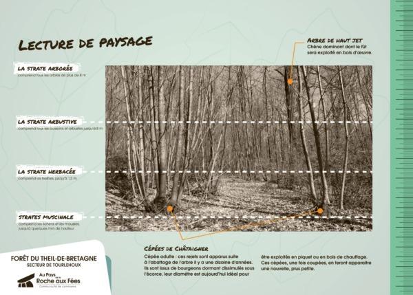 planche pédagogique éco-système-05-forêt theil de bretagne