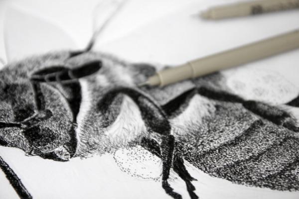 details esquisse abeille